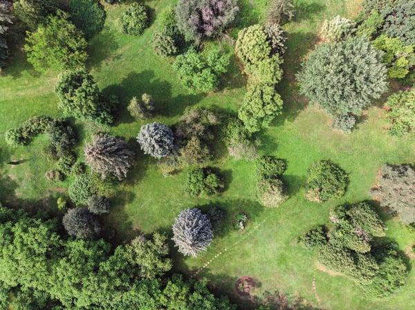 Trees_field_smaller